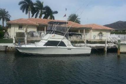 Phoenix Sportfish for sale in United States of America for $23,950 (£17,878)