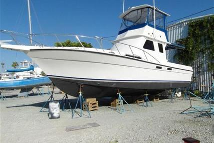 Custom Sport Fish Diesel for sale in United States of America for $129,000 (£97,760)