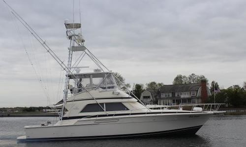 Image of Bertram 50 Convertible for sale in United States of America for $249,000 (£185,170) Brielle, NJ, United States of America