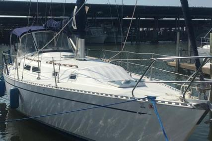 Islander for sale in United States of America for $44,900 (£32,522)