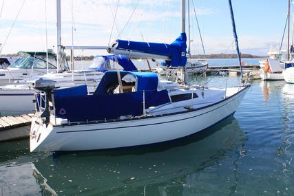 Trapper 300 for sale in United Kingdom for £8,950