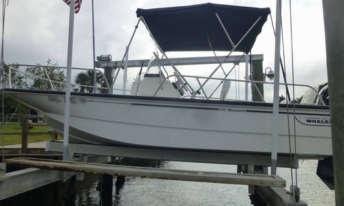 Image of Boston Whaler 170 Montauk for sale in United States of America for $29,400 (£22,153) New Port Richey, Florida, United States of America