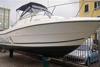 Robalo 2440 for sale in Italy for €40,000 (£35,280)
