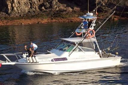 Boston Whaler 31 Sport Fisher man for sale in Spain for €50,000 (£44,947)
