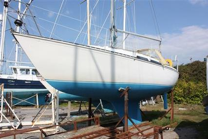 Trapper 501 for sale in United Kingdom for £3,000